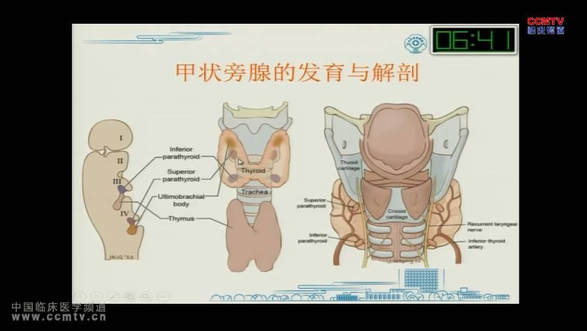 甲状腺疾病 预后分析 甲状旁腺功能减退  孙小亮:甲状腺术后甲状旁腺功能减退的原因及预防