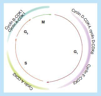 CDK4/6抑制剂治疗乳腺癌的最新进展