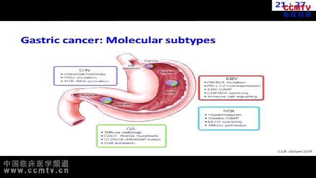 胃癌 诊疗策略 靶向治疗 精准医学 YJ Bang:胃癌精准医学 - 分子分型与靶向治疗