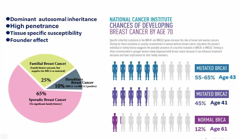 乳腺癌 基础医学 BRCA 基因组 谢小多:BRCA1/2基因在乳腺癌中的功能机制研究