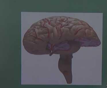 精神神经系统:脑干
